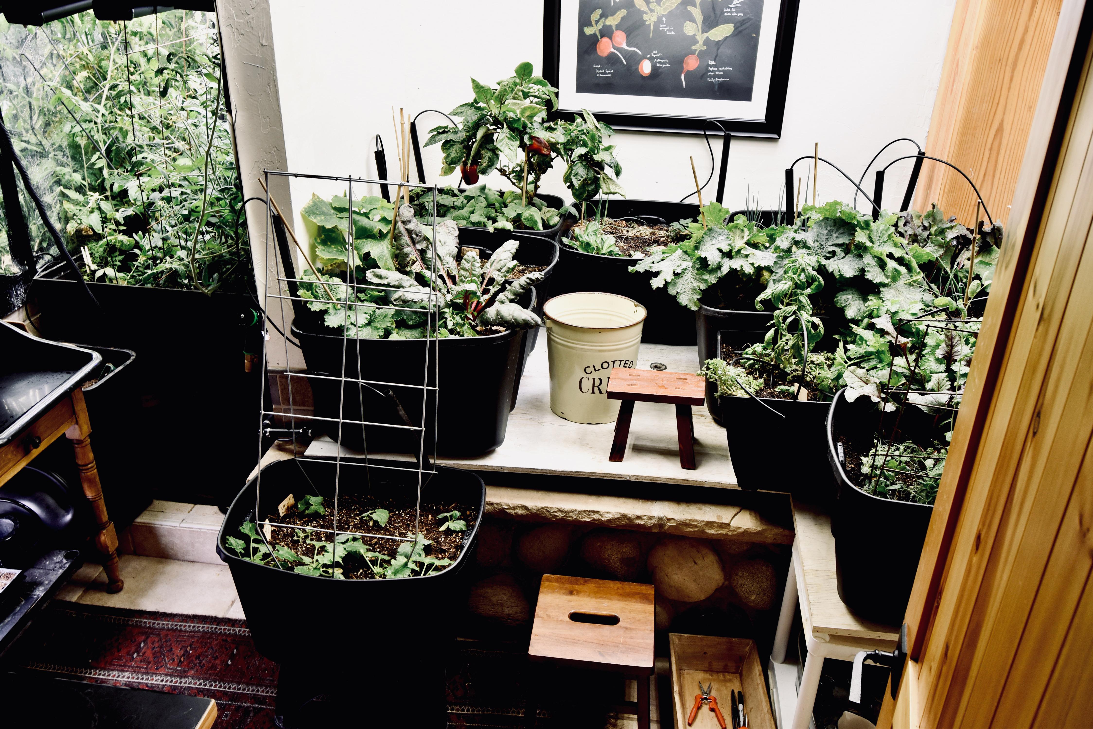 Our indoor garden